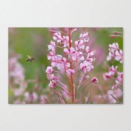 Fireweed 3990 Canvas Print