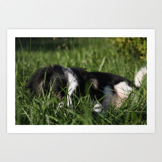 Puppy Hiding In The Grass Art Print