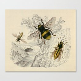 Naturalist Bee And Wasps Canvas Print