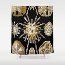 Ernst Haeckel Echinidea Sea Urchin Shower Curtain