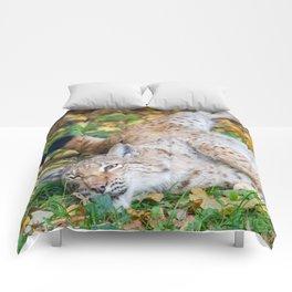 Playful Lynx Comforters