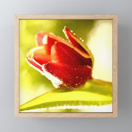 Glowing Red Tulip On A Vivid Green Background #decor #society6 Framed Mini Art Print