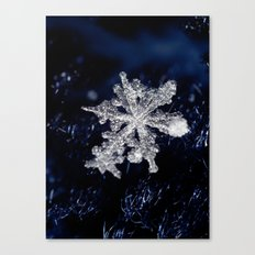 Winter Joy III Canvas Print