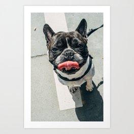Dawg Art Print