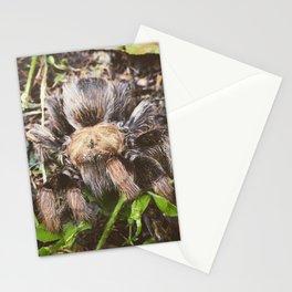 Tarantula's Greeting Stationery Cards