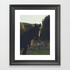 Black Stallion photo, big horse male under the italian sunset, high quality photography, hasselblad Framed Art Print
