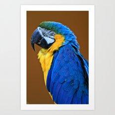 Polly Want A ... Art Print
