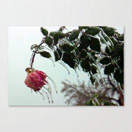 fROSEn Canvas Print