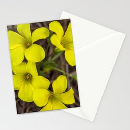 Cap Sorrel Stationery Cards