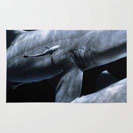 Shark Crossing Rug