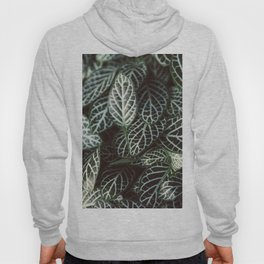 Botanical Gardens - Zebra Leaf #398 Hoody