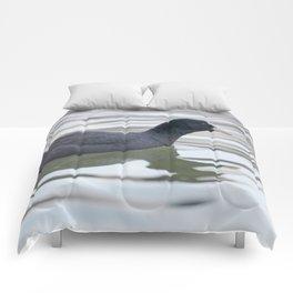 Coot swimming (Fulica atra) Close up Eurasian Coot Comforters