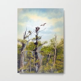 Nesting Ospreys In The Southern USA Metal Print