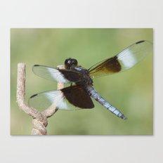 dragonfly 2016 II Canvas Print