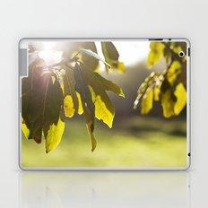 leaves at sunset Laptop & iPad Skin