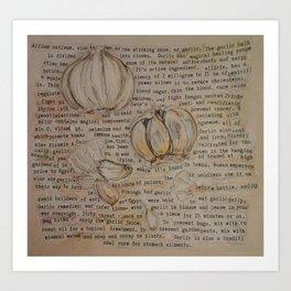 Garlic Collage Art Print