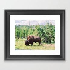 Buffalo!  Framed Art Print