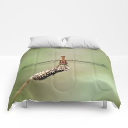 Autumn Meadowhawk Dragonfly Comforters