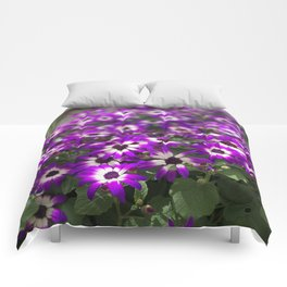 Cineraria Flower Comforters