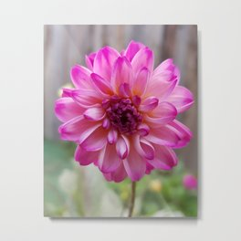Costa rica nature wild colorful flower Metal Print
