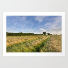 Field of Barley Art Print