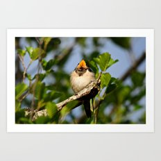 Singing swallow Art Print