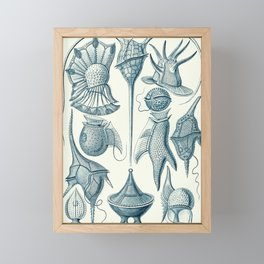 Ernst Haeckel Peridinea Plankton Framed Mini Art Print