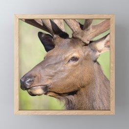 Watercolor Elk Bull 32 Framed Mini Art Print