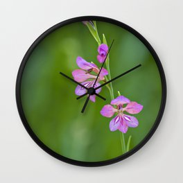 Beauty in nature, wildflower Gladiolus illyricus Wall Clock