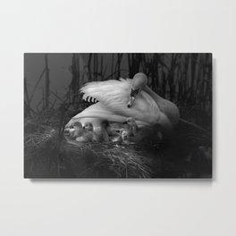 Swans Metal Print