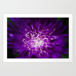 Abstract Flower Nature Photo Art Print
