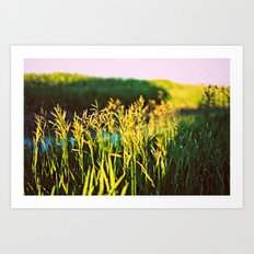 Morning Dew Art Print