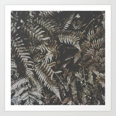 Forest Fern Art Print