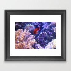 Lonely Fish Framed Art Print