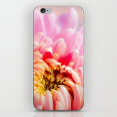 Pink Chrysanthemum Flower iPhone & iPod Skin