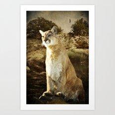 Cougar Art Print