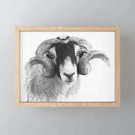Black and which moorland sheep Framed Mini Art Print