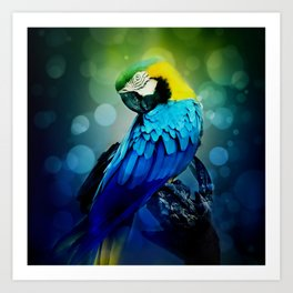 Macaw on branch Art Print