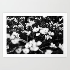Surrounded by Dreams B&W Art Print