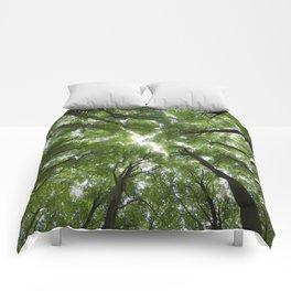 Beechwood Comforters