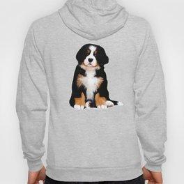 Bernese mountain dog puppy Hoody