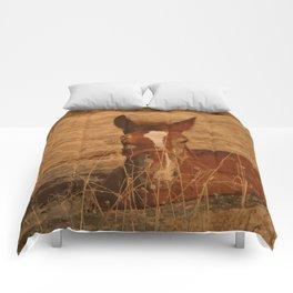Brown Horse Comforters