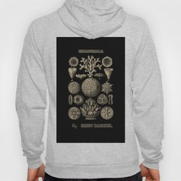"""Hexacoralla"" from ""Art Forms of Nature"" by Ernst Haeckel Hoody"