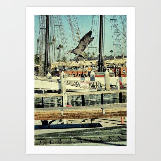 Grey Gull Art Print