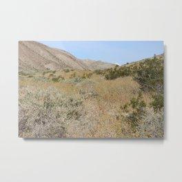 Mountain Wildflower Bloom Coachella Valley Wildlife Preserve Metal Print