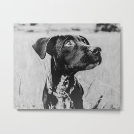 Wheatfield Dog Portrait // Sharing Memories with A Best Friend Such Amazing Eyes Metal Print