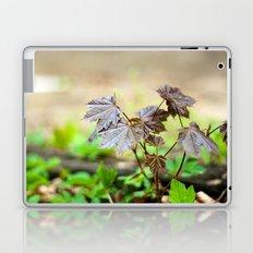 Baby Maple Laptop & iPad Skin