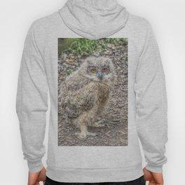 Painted Baby Owl Hoody