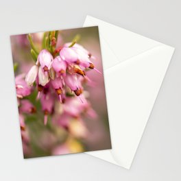 Pink Heather Calluna Stationery Cards