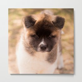 Cute American Akita Puppy #decor #society6 #buyart Metal Print